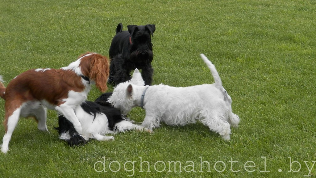 Куча мала.